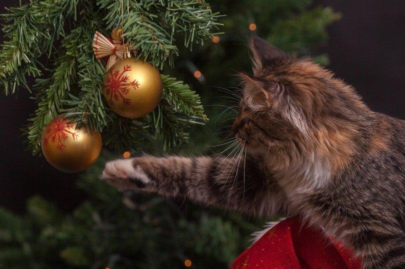Sapin de Noël avec chat qui joue avec une boule de décoration