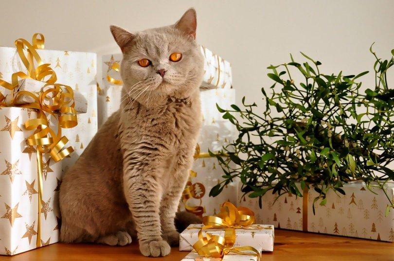 cadeaux et chat