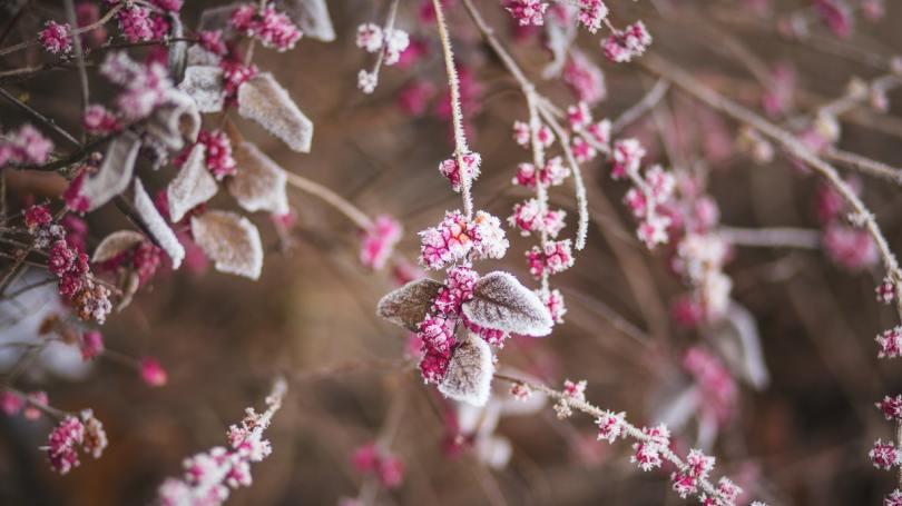 Comment bien protéger ses plantes de balcon en hiver ?