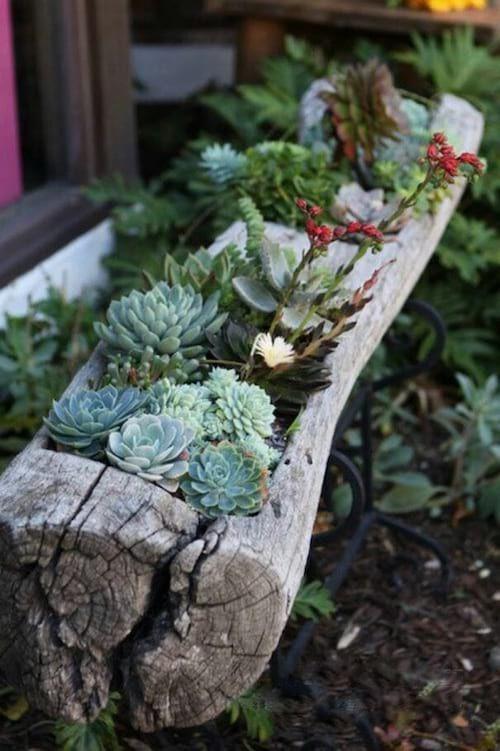 Utiliser un tronc d'arbre en guise de jardinière