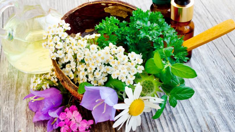 Santé : 5 plantes médicinales méconnues à adopter